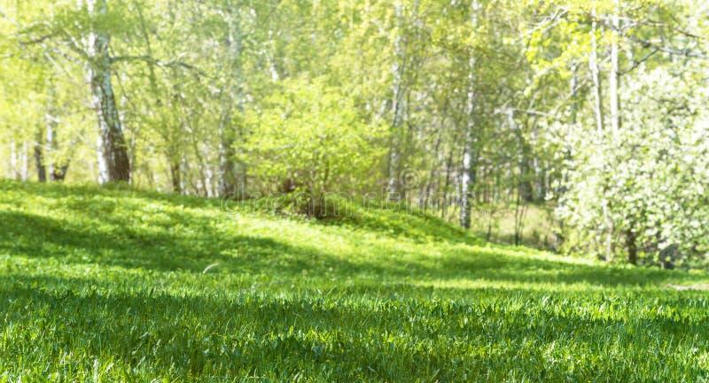 Markplansikt av den sommarväxtgräsmatta och lövskogen arkivbilder