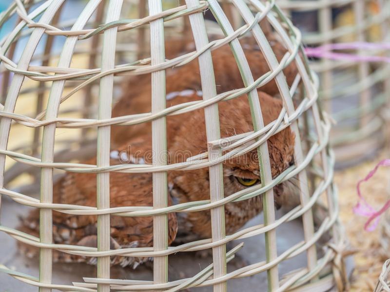 Markt des frühen Morgens in Luang Phabang Illegaler Handel mit Wildtieren in Laos stockfoto