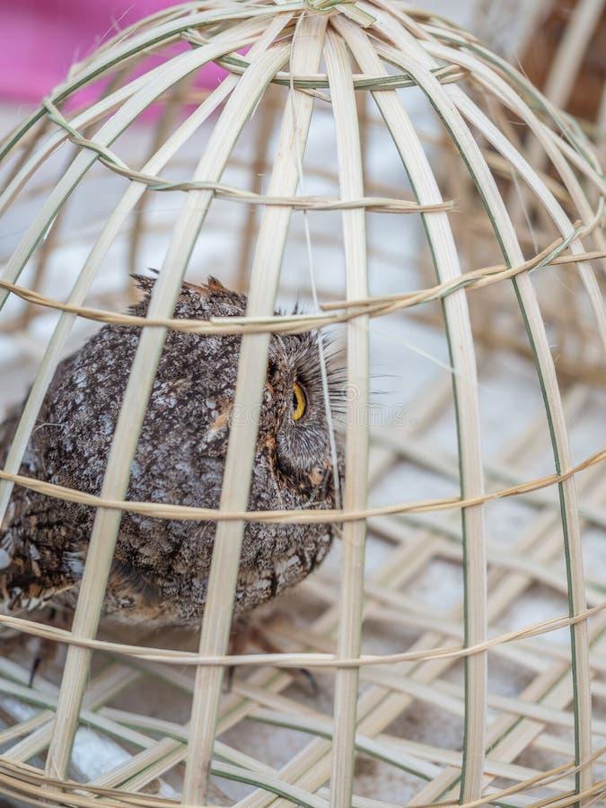Markt des frühen Morgens in Luang Phabang Illegaler Handel mit Wildtieren in Laos lizenzfreies stockfoto
