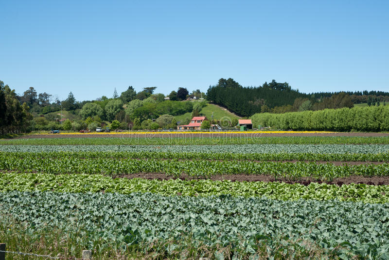 Marktgärten, Gemüse. stockbilder