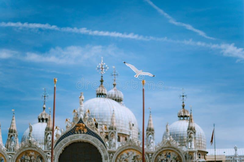 Marktplatz San Marco Saint Mark Square mit Basilica di San Marco Dacharchitekturdetails mit Fliegenseemöwen-Vogel aginst stockbild