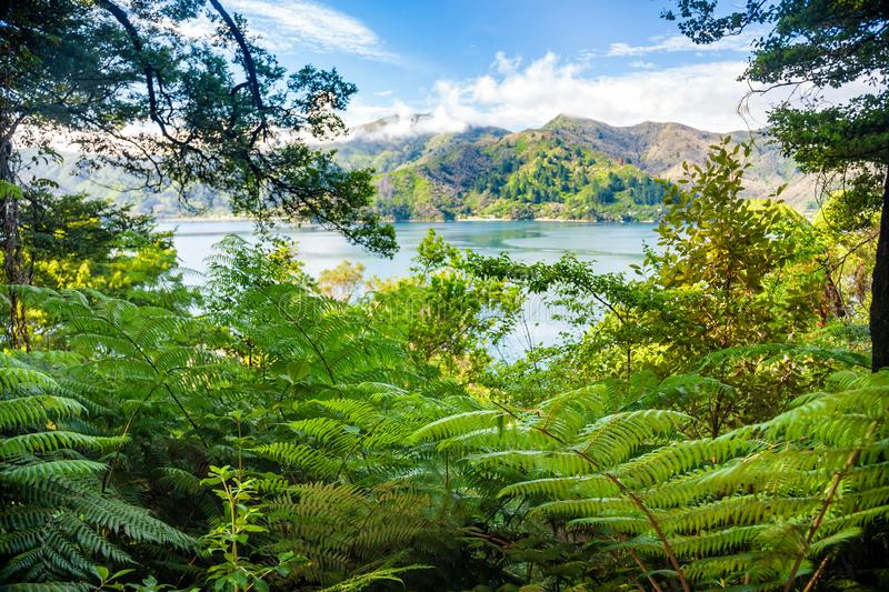 Marlborough soa como visto da rainha Charlotte Track South Island New Zealand fotos de stock royalty free
