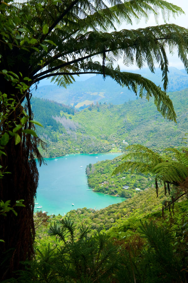 Download Marlborough Sounds stock image. Image of scenics, fern - 14168793