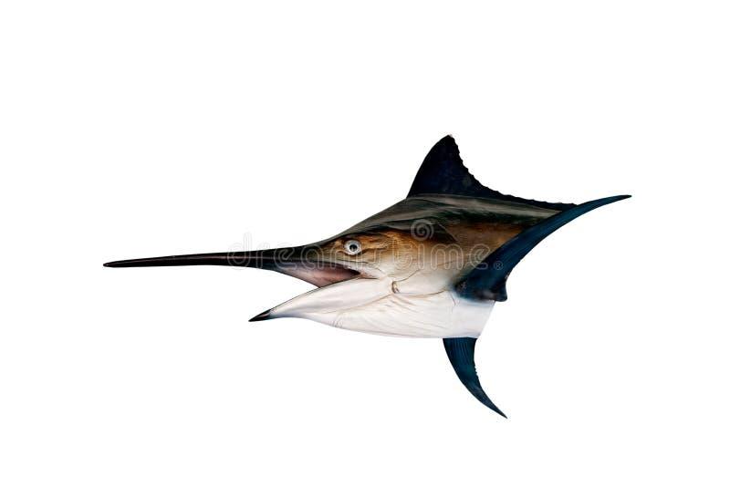 Marlijn - de Zwaardvissen, Zeilviszeevissen (Istiophorus) isoleren stock foto's