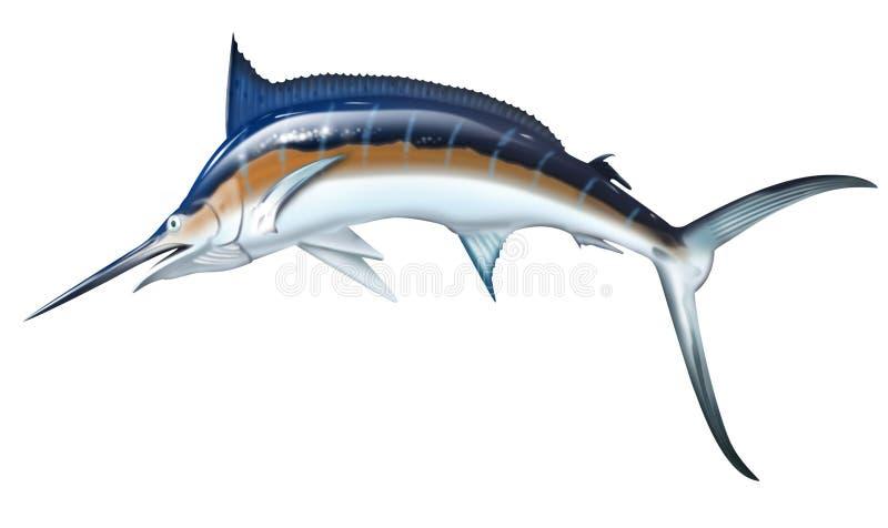 Marlin ilustracja wektor