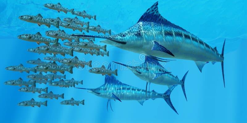 Marlin après une école de poissons image libre de droits