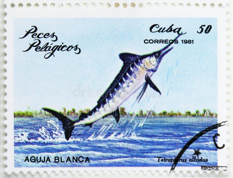 Marlin blanc (albidus de Tetrapturus), serie de poissons de mer, vers 1981 photo libre de droits