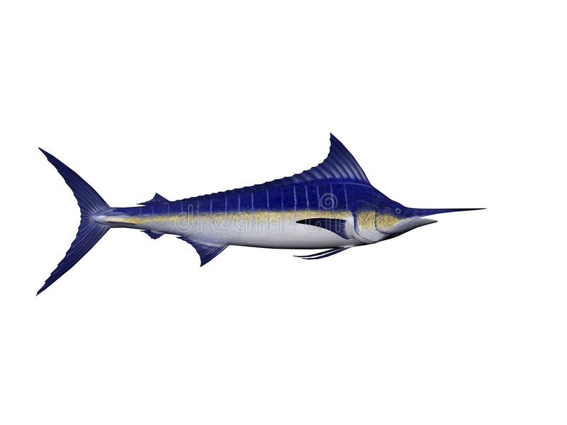 Marlin bleu illustration stock