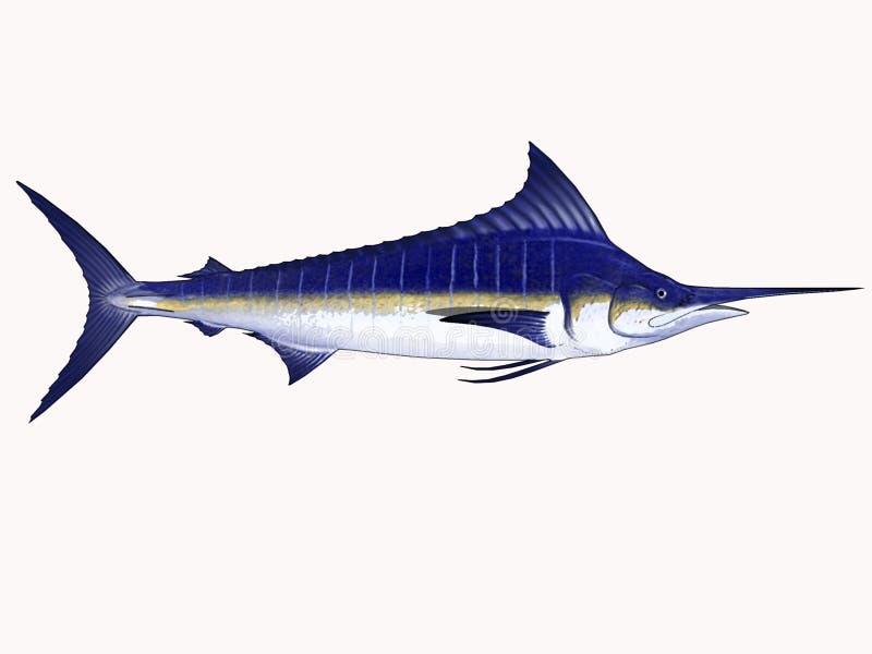 Marlin de dessin animé illustration de vecteur