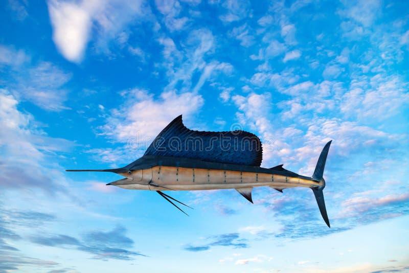 Marlin - Espadarte,Peixes-marisco-salgados Istiophorus Fundo do céu azul imagens de stock royalty free