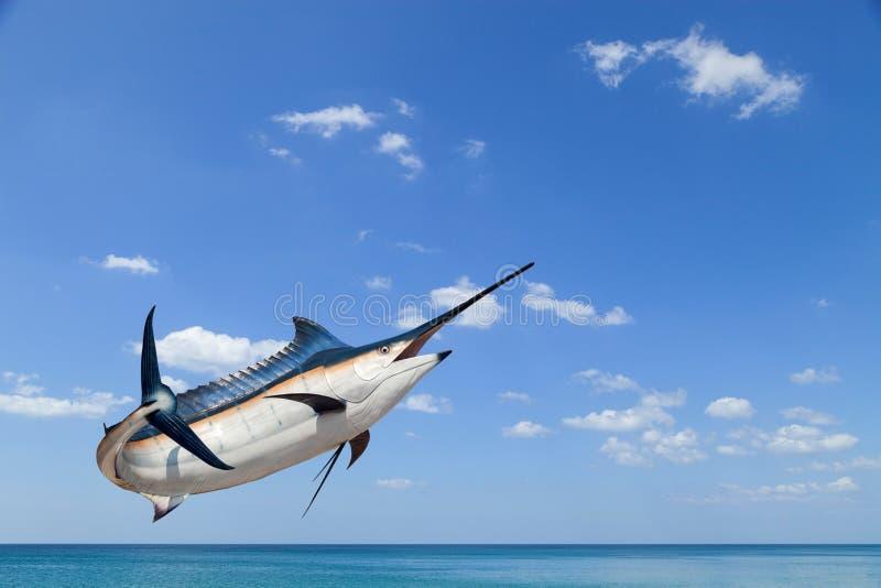 Marlin - espadon, isolat de poissons de mer de pélerin (Istiophorus) photos stock