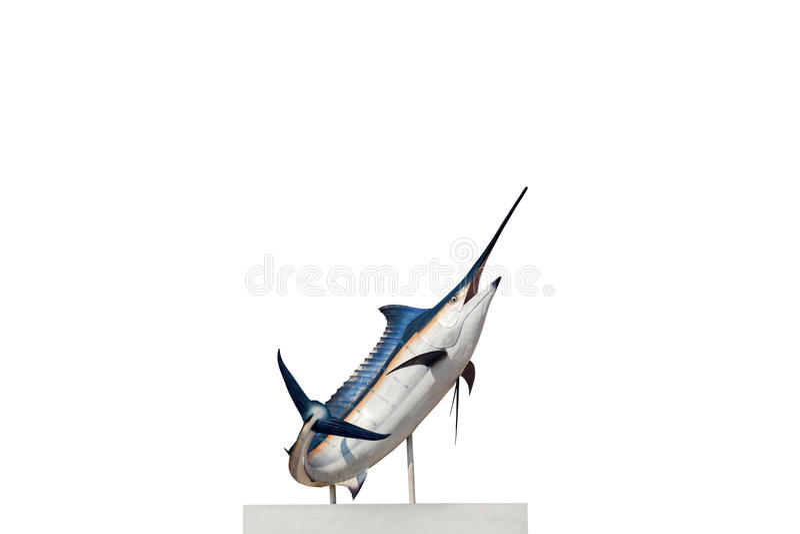 Marlin - svärdfisk, isolat för Sailfishsaltvattensfisk (Istiophorus) royaltyfri fotografi