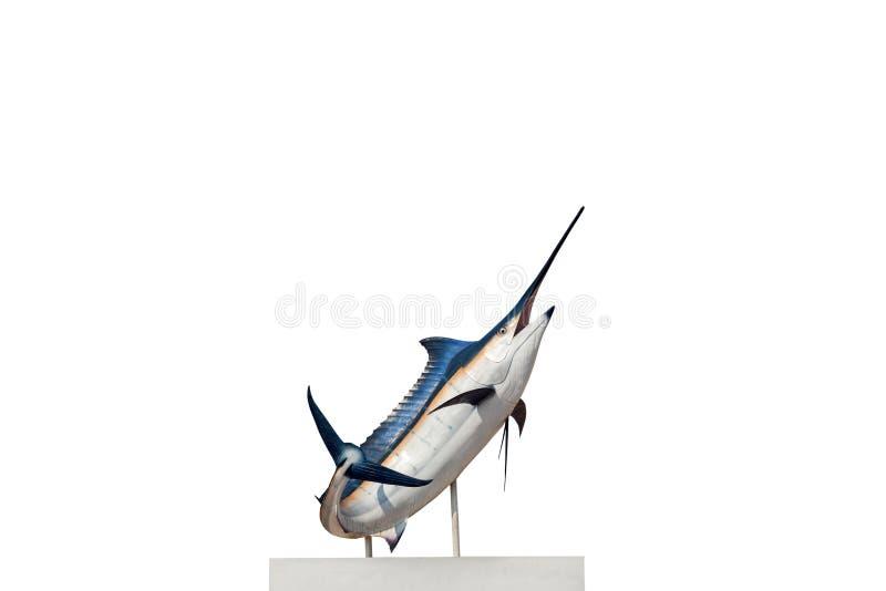 Marlin - svärdfisk, isolat för Sailfishsaltvattensfisk (Istiophorus) fotografering för bildbyråer