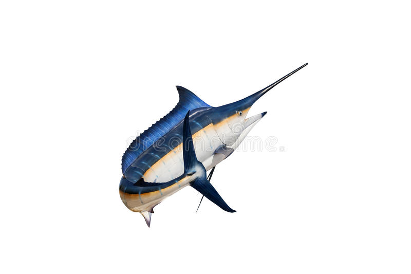Marlin - svärdfisk, isolat för Sailfishsaltvattensfisk (Istiophorus) arkivbilder