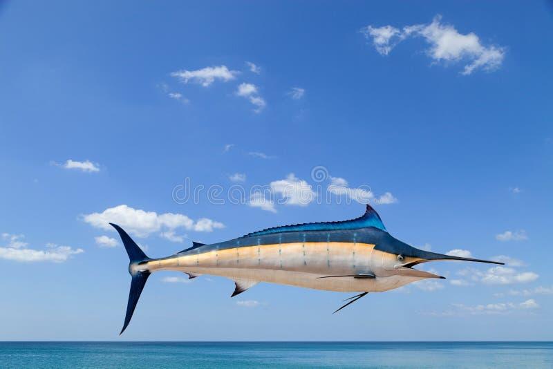 Marlin - svärdfisk-, Sailfishsaltvattensfisk & x28; Istiophorus& x29; isolat royaltyfria bilder