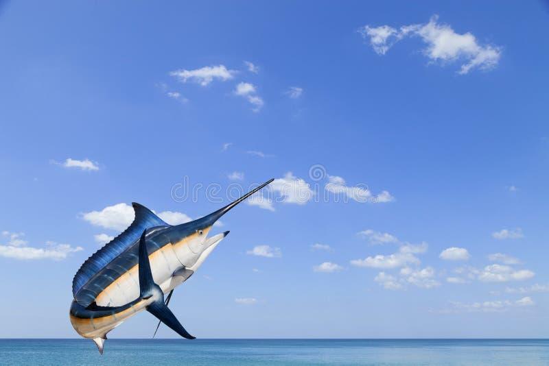 Marlin - svärdfisk-, Sailfishsaltvattensfisk & x28; Istiophorus& x29; isolat arkivfoton