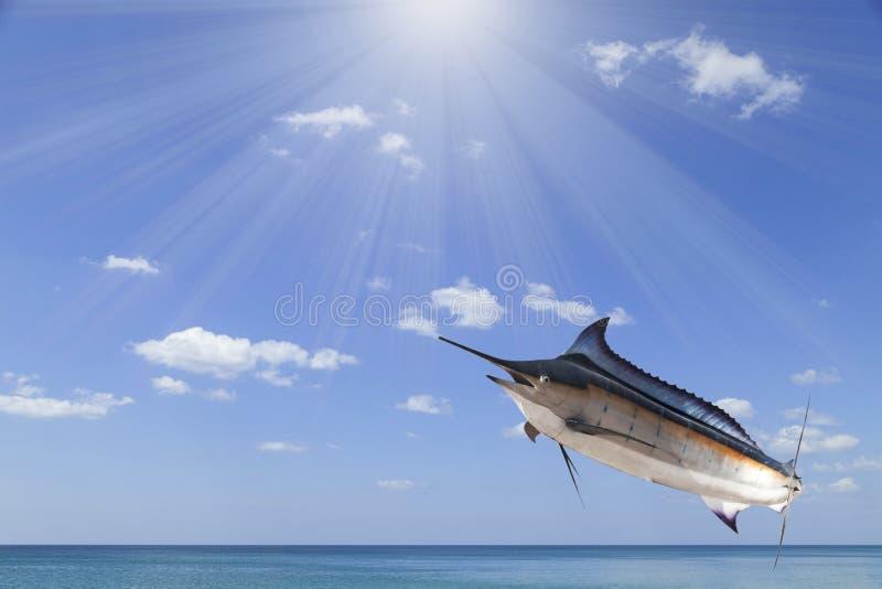 Marlin - svärdfisk, Sailfishsaltvattensfisk (Istiophorus) med solen arkivbild