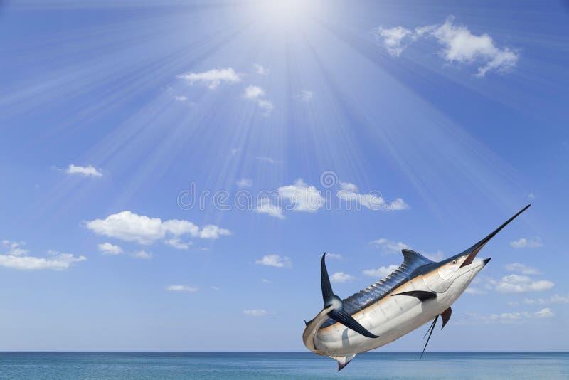 Marlin - svärdfisk, Sailfishsaltvattensfisk (Istiophorus) med solen arkivbilder