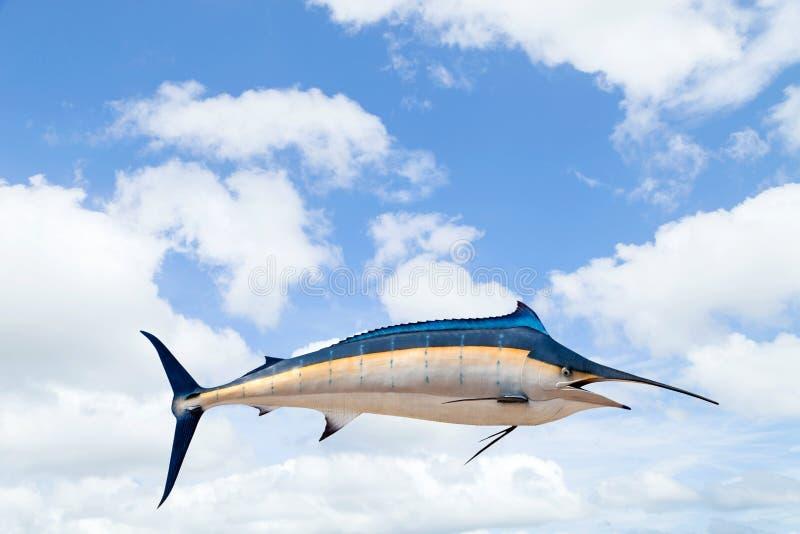 Marlin - svärdfisk, Sailfishsaltvattensfisk (Istiophorus) på himmel b fotografering för bildbyråer
