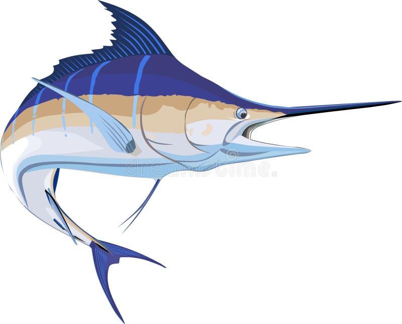 Marlin stock illustration