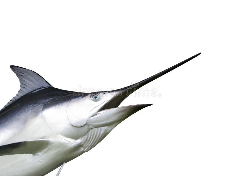 Marlinfisk - svärdfisk royaltyfria bilder