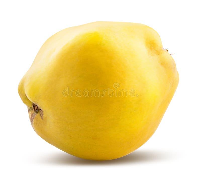 Marmelo amarelo fresco isolado no fundo branco Trajeto de grampeamento imagens de stock