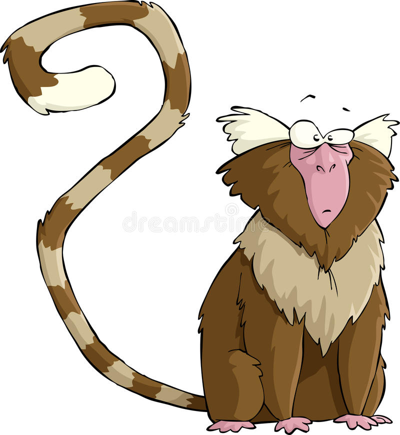 Marmoset illustration stock