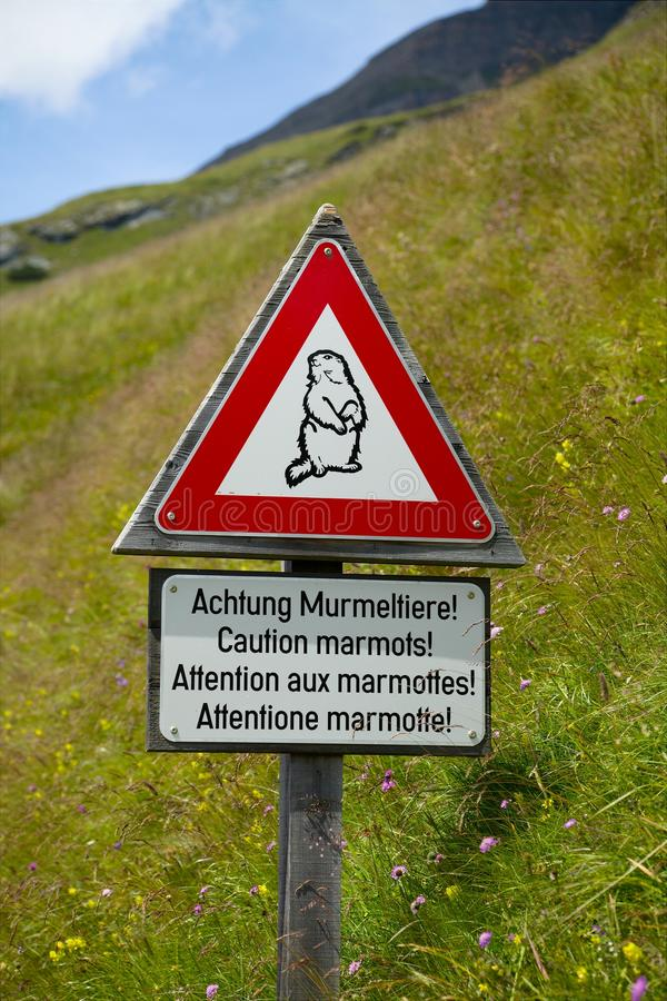 Download Marmots stock image. Image of hill, marmots, alpine, beware - 30416779