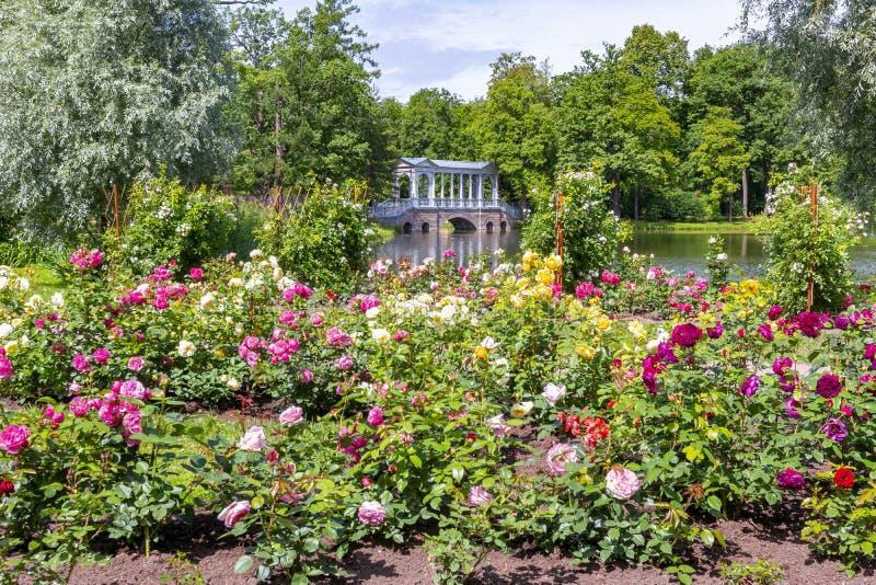 Marmurowy most i kwiaty w Catherine parku, Tsarskoe Selo, ?wi?ty Petersburg, Rosja zdjęcia stock