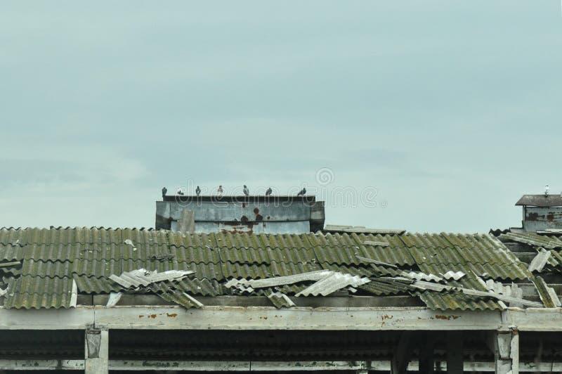 Marniejący dach zdjęcia royalty free