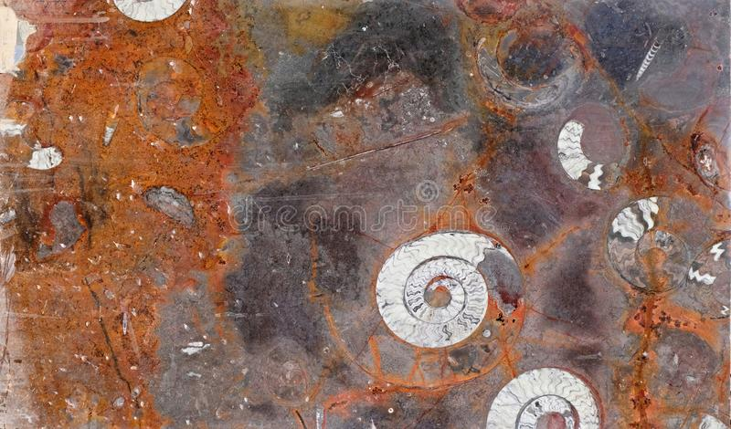 Maroccan marble, known for containing a large number of petrified prehistoric fossil animals and mollusks.  stock photo