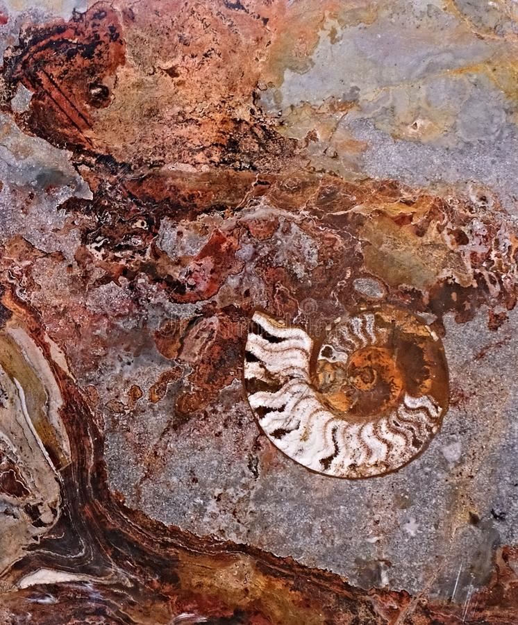 Maroccan marble, known for containing a large number of petrified prehistoric fossil animals and mollusks.  stock photos