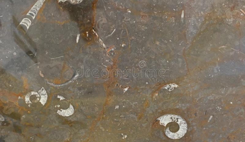 Maroccan marble, known for containing a large number of petrified prehistoric fossil animals and mollusks.  royalty free stock photos