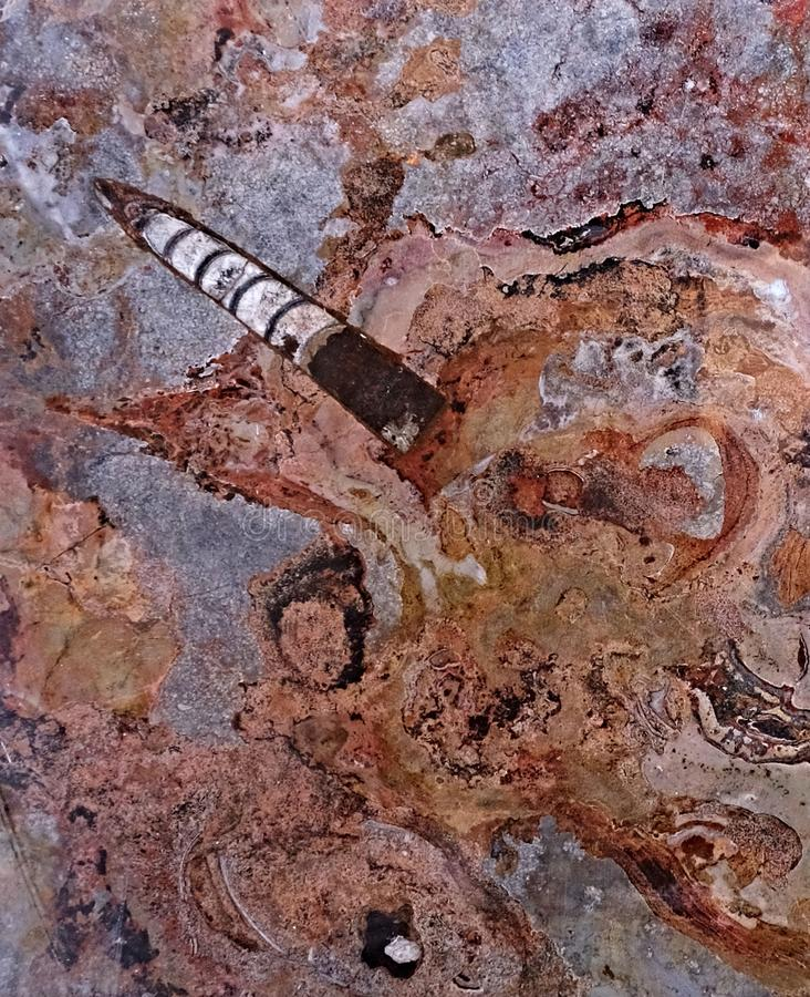 Maroccan marble, known for containing a large number of petrified prehistoric fossil animals and mollusks.  stock photography