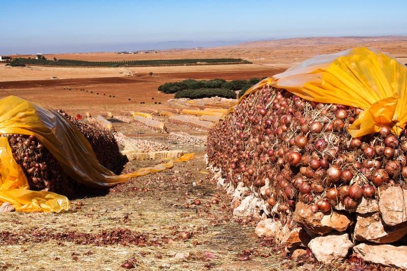 Marokkaans berglandschap tussen Midelt en Meknes stock afbeelding