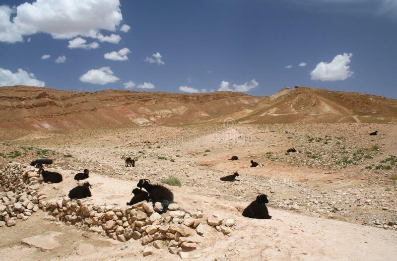 Marokkaans landschap royalty-vrije stock fotografie