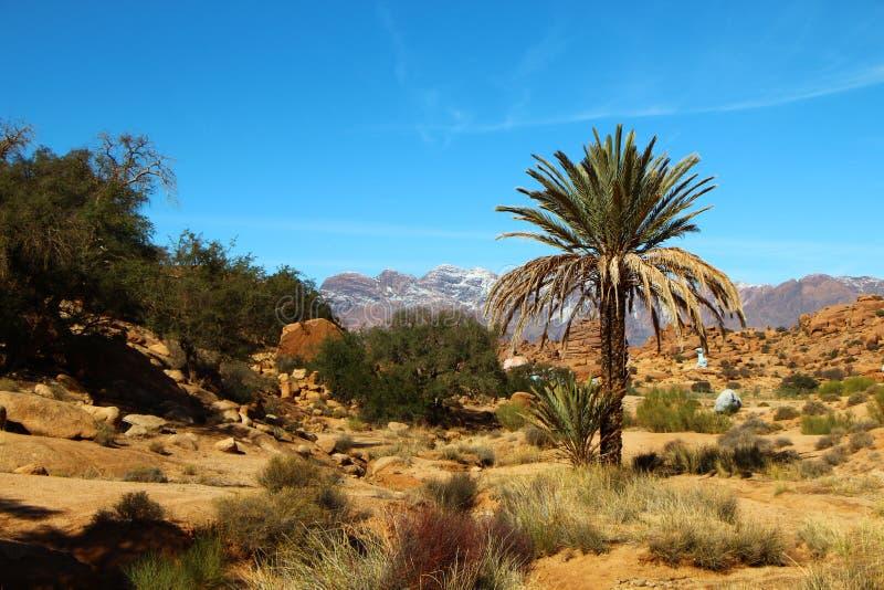 Marokko-Landschaftskontrast mit Palmen lizenzfreies stockfoto