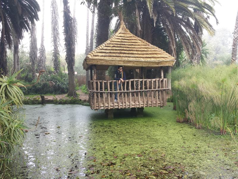 Marokko-Zoo stockfotos