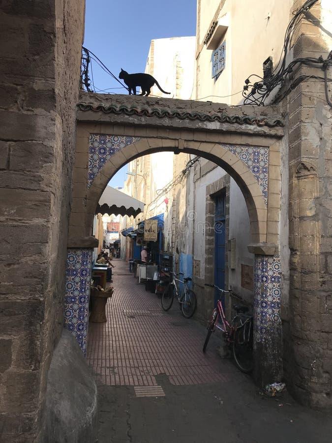 Maroko Przybłąkany czarny kot na dachu obrazy stock