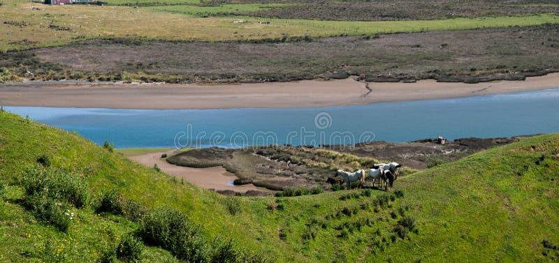 Marokopa河 免版税库存图片