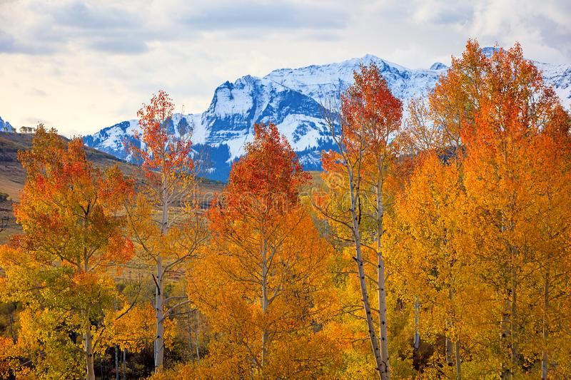 Maroon Bells aspens in the Colorado Rockies. stock photography