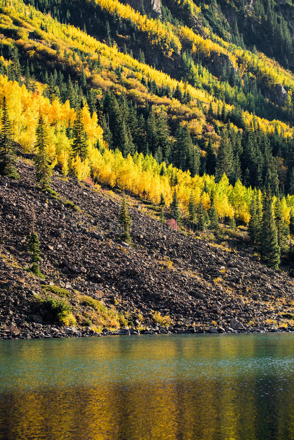 Maroon bells forest - colorado aspen autumn fall colors royalty free stock photos