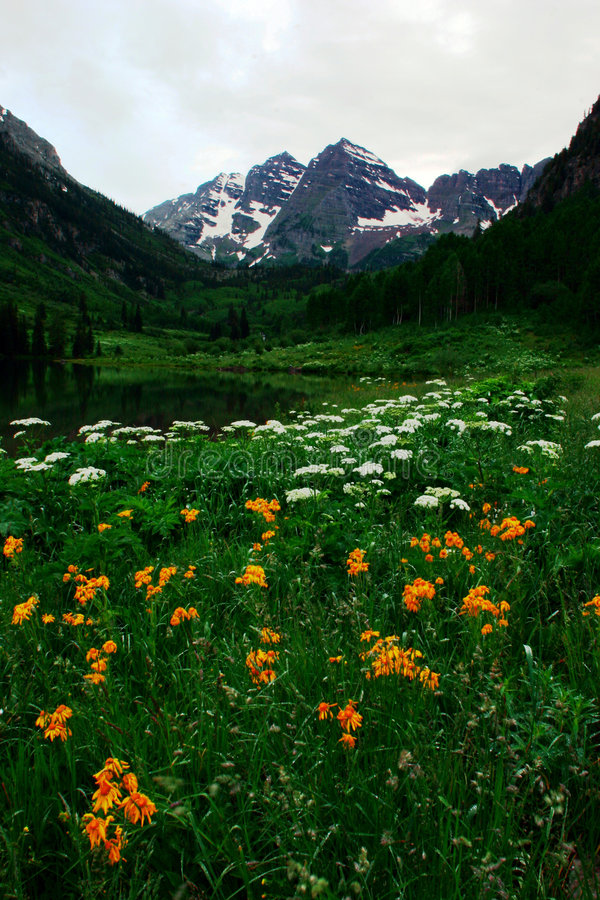 Maroon Bells in full bloom stock images