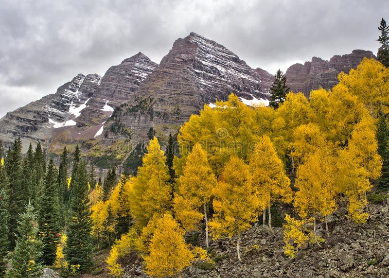 Maroon Bells peaks and fall colors in the Rocky Mountain National Park. The Maroon Bells peaks, dusted with snow, along with autumn colors of golden aspen trees stock images