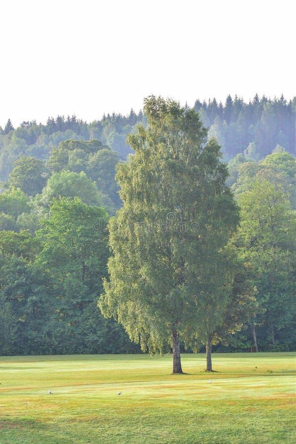 Marque al club de golf del ` s en el kinna Suecia imágenes de archivo libres de regalías