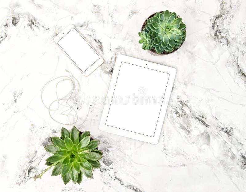 Marque a configuração do plano da tabela do escritório do telefone das plantas da planta carnuda do PC fotografia de stock