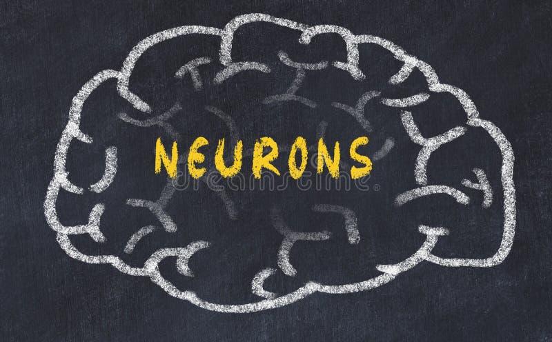 Marque el dibujo con tiza del cerebro humano con las neuronas de la inscripción foto de archivo