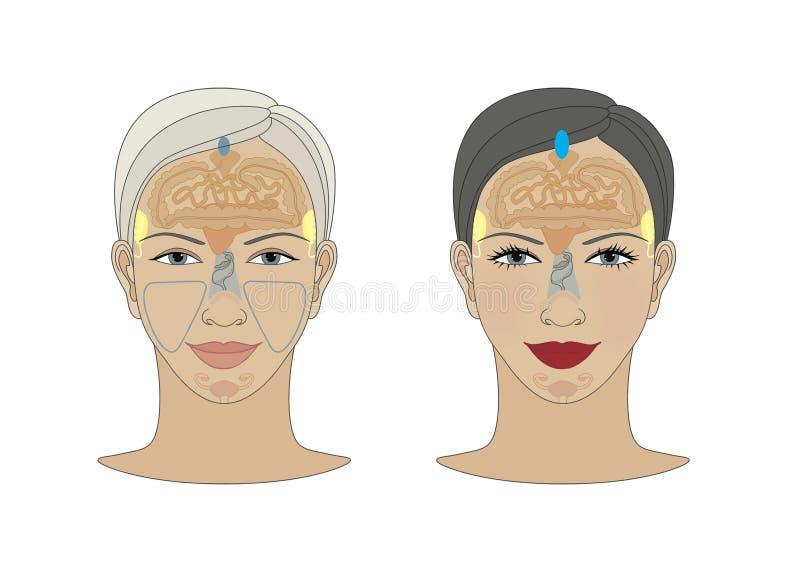 Marqueurs des zones de r?flexoth?rapie Projection des organes internes sur le visage d'une femme D'isolement sur le fond blanc illustration stock