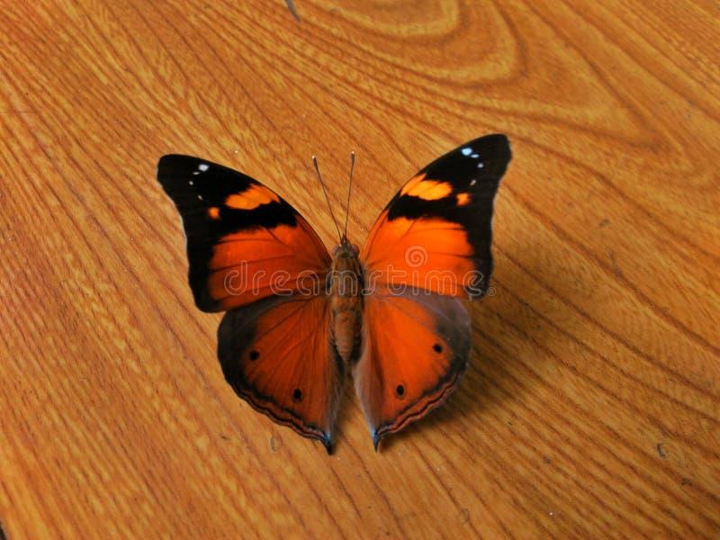 Marrón de la mariposa imagenes de archivo