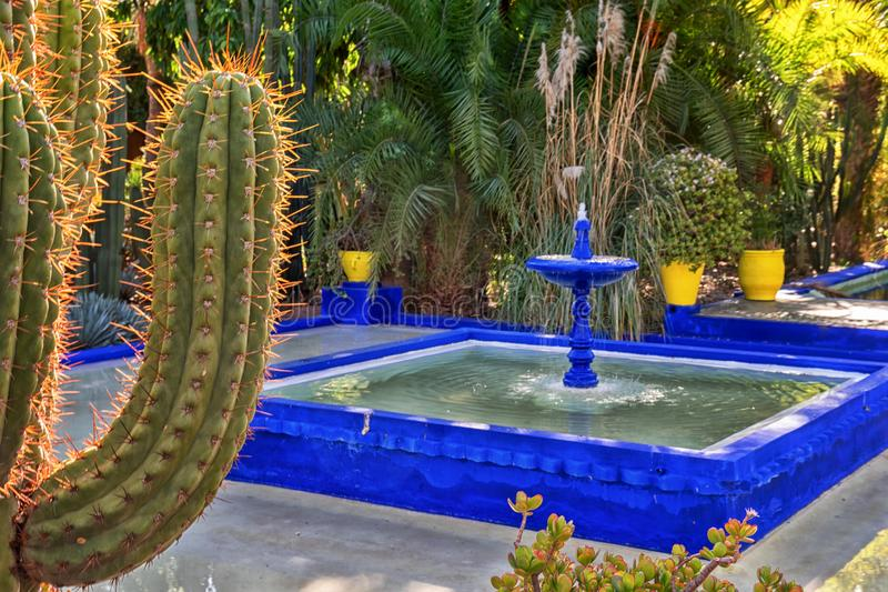 Marrakech, Morocco - 11, 2019 : Various cactuses at the Jardin Majorelle botanical garden located in Marrakech, Morocco. royalty free stock photos